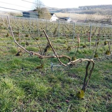 Werk in de wijngaard van december tot februari