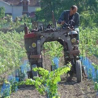 Werk in de wijngaard in mei