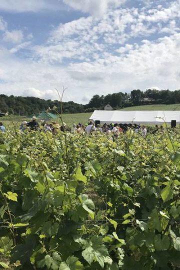wijngaard met op de achtergrond een witte luifel en mensen die de escapade lopen