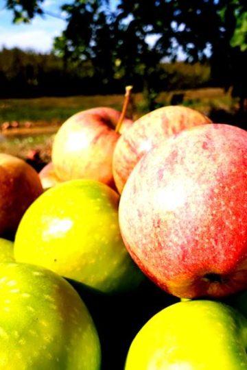 appels met een boomgaard wazig op de achtergrond